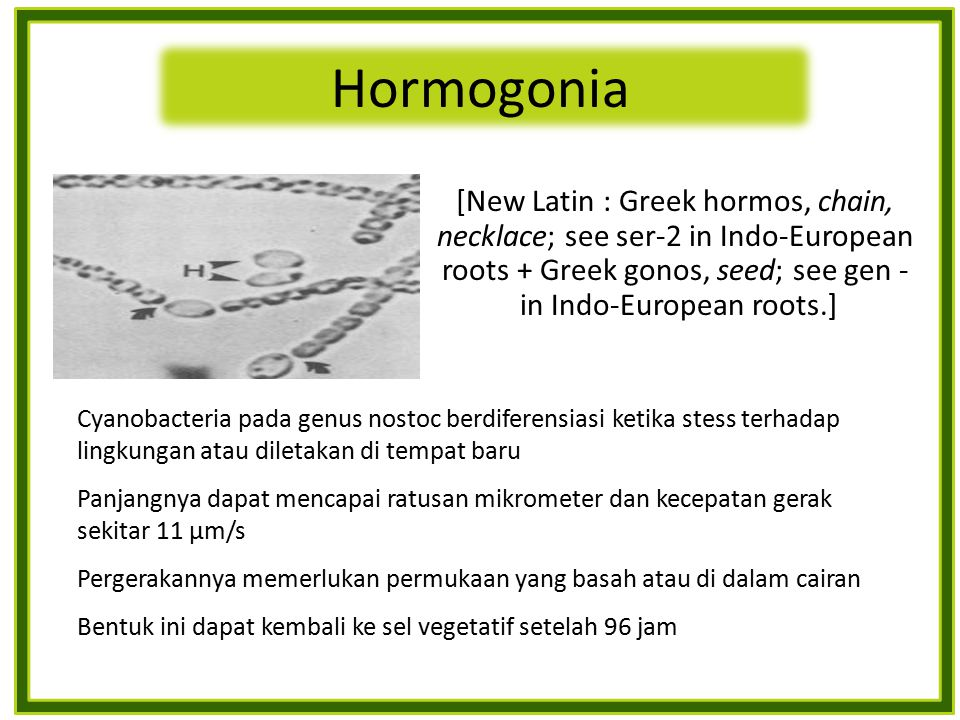 Hormogonia [New Latin : Greek hormos, chain, necklace; see ser-2 in Indo-European roots + Greek gonos, seed; see gen - in Indo-European roots.]